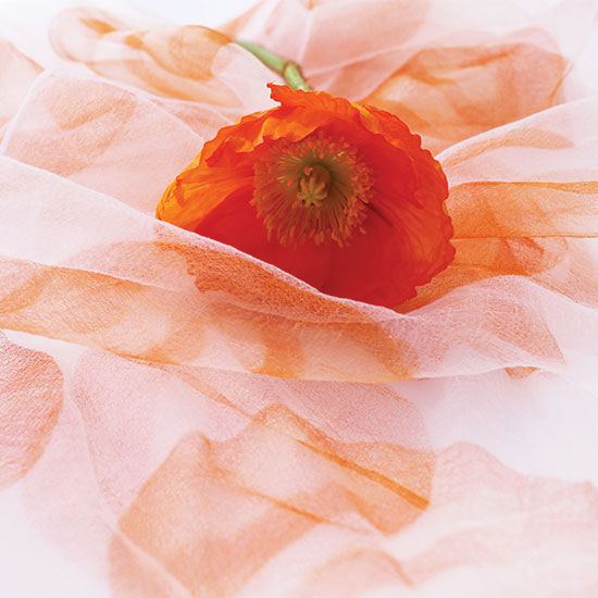 art prints - Floating Poppy by La Fleur Kitchen