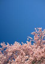 Blossoms 1 by Verena Radulovic