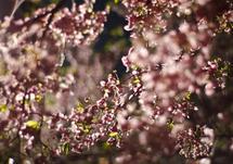 Blossoms 4 by Verena Radulovic