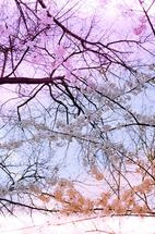 Blossoms 3 by Verena Radulovic