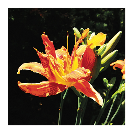 art prints - brilliant botanic by Studio Celeste
