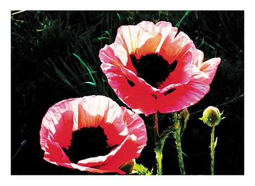 art prints - Pink Bloom by Studio Celeste