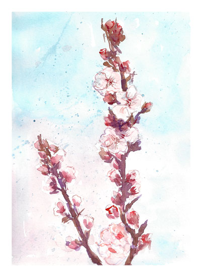 art prints - Cherry Branch by Matilda