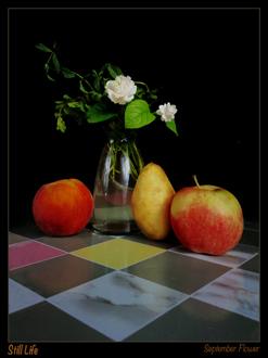 art prints - September Flowers by abdulrhman