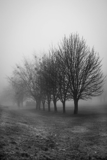 art prints - Fog in the Park by Agnes Szlapka