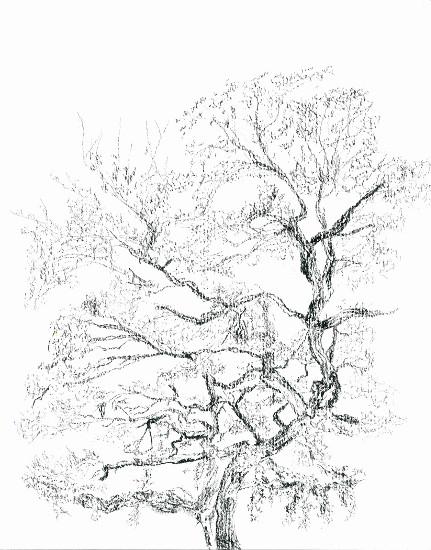 art prints - Tangled Tree by Alicia Saint John