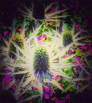 Moonflower Vignette