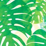 Monstera by Verso Prints