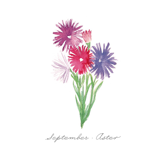 art prints - September Aster by Liz Conley