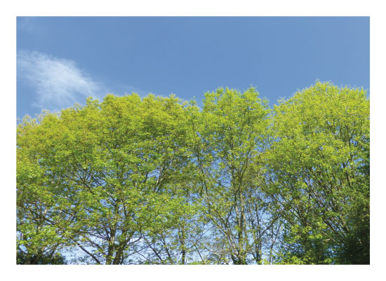 art prints - The French Oaks in Spring by Suzie Gilmour