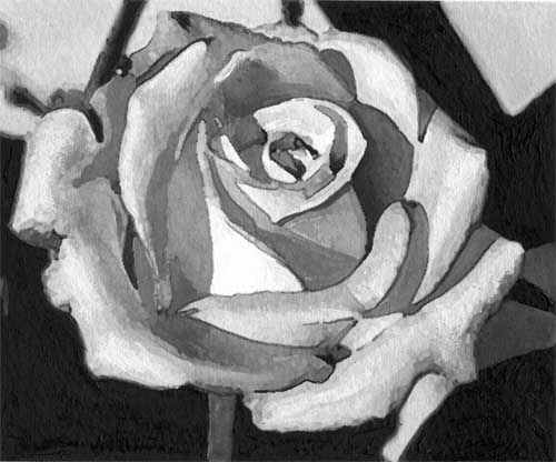 art prints - Single White Rose by Juliet Sender