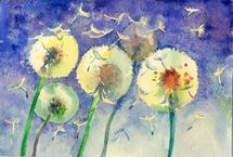 Dandelion by Jarey Lu