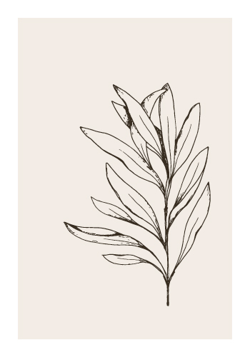 art prints - Sage by Maija Rebecca