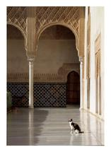 Cat in the Alhambra by Rachel Vann