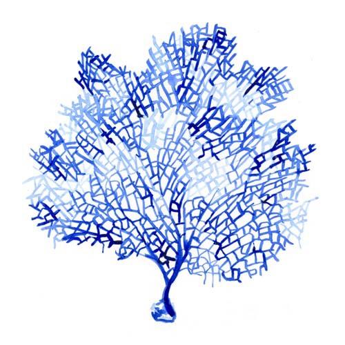 art prints - Blue Fan Coral by Anna Hilton