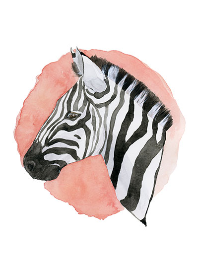 art prints - Zebra Portrait by Margaret Kelly