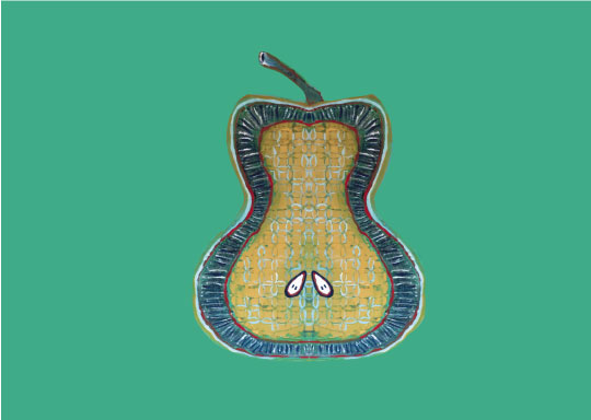 art prints - fancy a slice of pear? by ann t jones