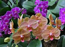 Vibrant Orchids by Niki Mangino