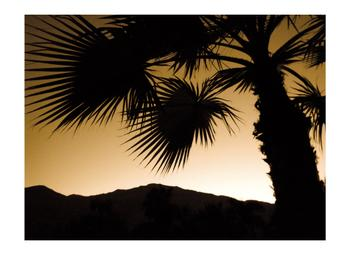 Palm Springs Silhouette