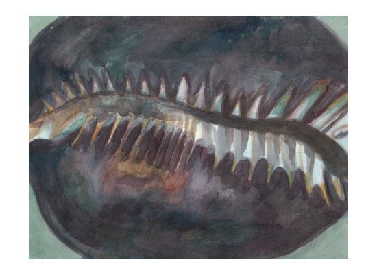 art prints - Cowry Shell 2 by Island Art and Soul