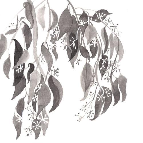 art prints - eucalyptus-2 by L-Studio