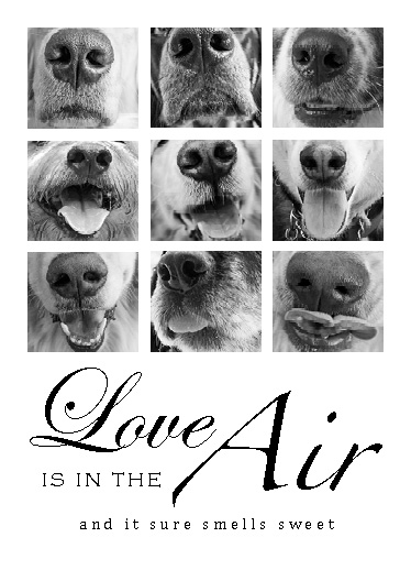 valentine's day - Love Is In The Air by CJ Smith