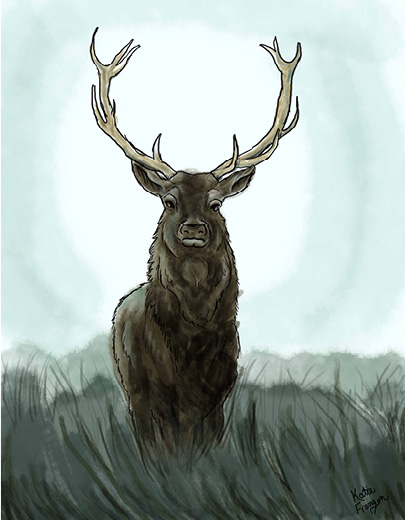 art prints - Silent Deer by Katherine Franzen