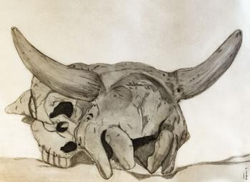 Cow skull with horns Drawing
