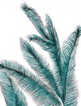 Palm by Alicia Bazan