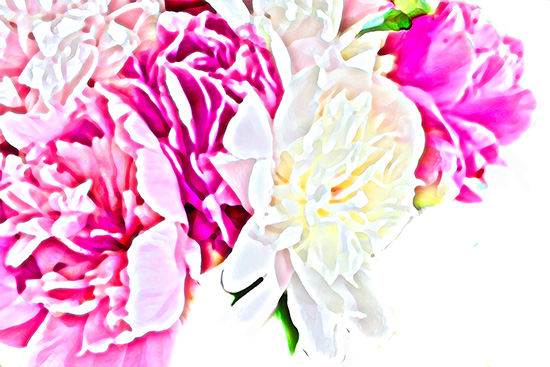 art prints - peony paradise by Laurie Beasley