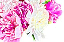 peony paradise by Laurie Beasley