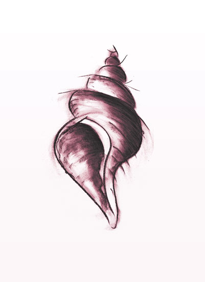 art prints - Moody Conch by Kyla Donkersgoed