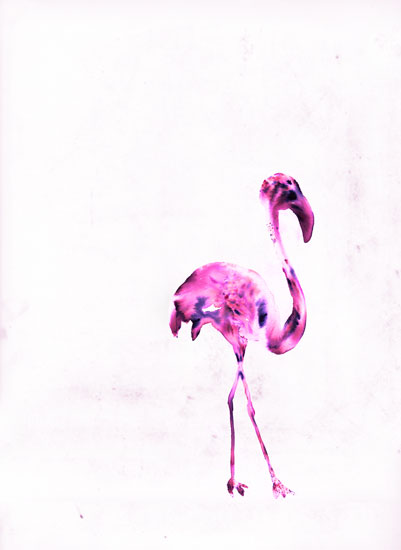 art prints - Flamingo by Kyla Donkersgoed