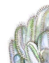 Cactus by Alicia Bazan