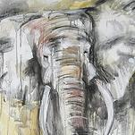 African Elephant by Kelsey Auger