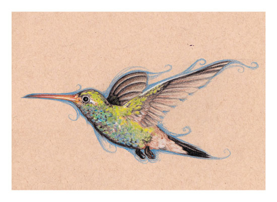 art prints - Hummingbird Sketch by Rachel Kennison