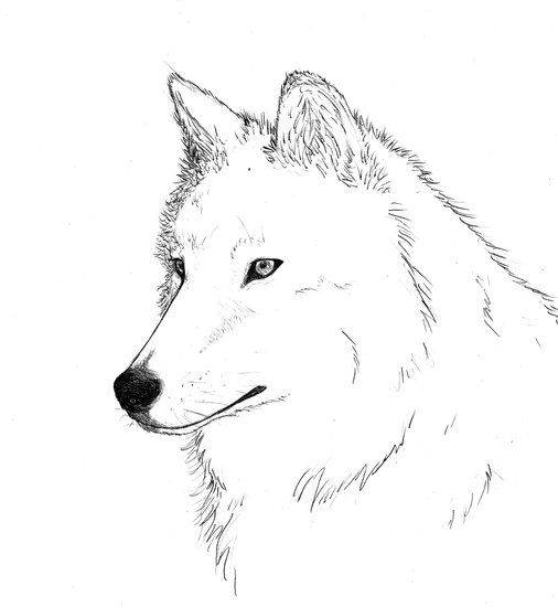 art prints - Wolf by Crystal Jones