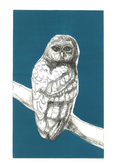 art prints - Blue Owl by Alice Heinrich