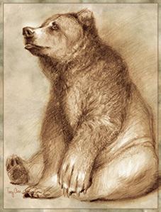 Big Brown Bear 1