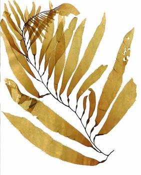 Seaweed Fish Print #002
