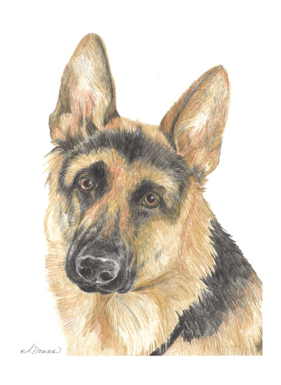 art prints - German Shepherd by Amy Downs