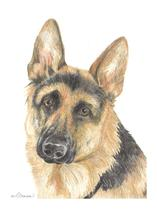 German Shepherd by Amy Downs