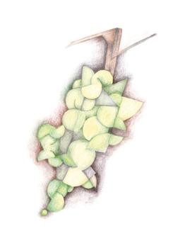 Cubist Green Grapes