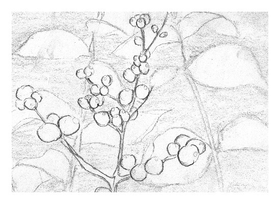 art prints - Winter Berry Branch by Tess Williams