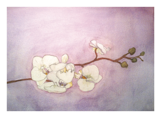 art prints - Serene Orchid by PaperAndPetals