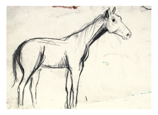 art prints - Horse Study - Proportions by AmmandaCo