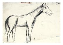 Horse Study - Proportio... by AmmandaCo