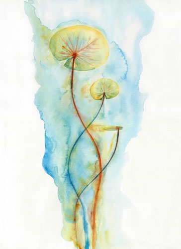 art prints - Water lily by LARAND