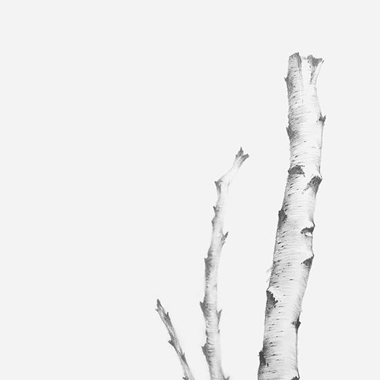 art prints - Birch by jinseikou