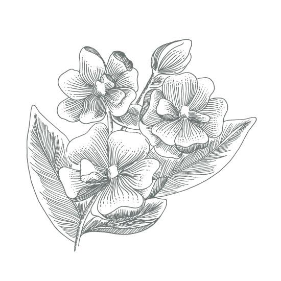 art prints - Sweet Southern Magnolias by Rachel Bartunek